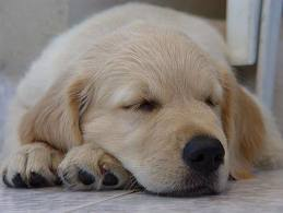 File:Cute wittle dog.jpeg