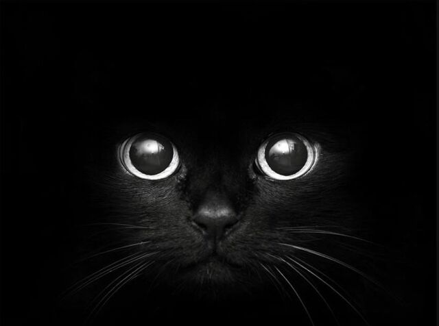File:Profile Picture ~ Cat eyes.jpeg