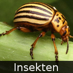 File:DE-Tiere-insects.jpg