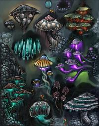Z-Magoor Mushrooms