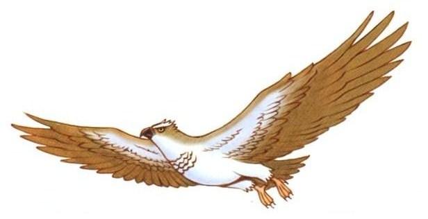 File:Gyoutenmaru color 1.jpg