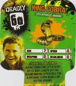 Deadly60Factsheet-King Cobra