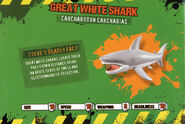 Deadly60Factsheet-Great White Shark