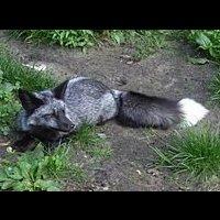 File:Foxtreeclan 5289228.jpg
