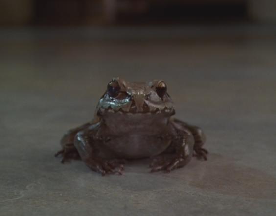 Ficheiro:Boy turned Frog.jpg
