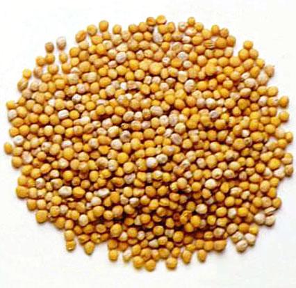 File:Mustard seed.jpg