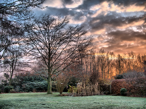 File:Winterly Sunrise in Garden.jpg