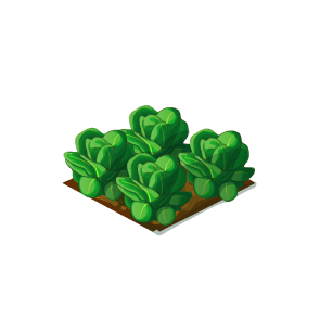 File:Crop-Lettuce.png