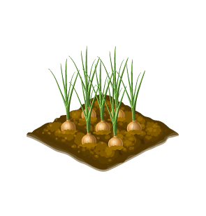 File:Seedling-Wild Onion.png
