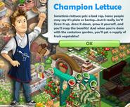 Champion Lettuce