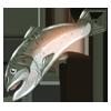 Ingredient-Giant Salmon