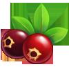 Ingredient-Cranberry
