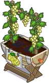 Harvestable-White Grape Planter
