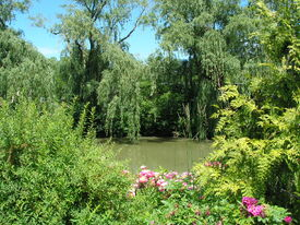 CBG lake and flowers