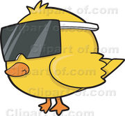 18806 cool yellow chicken wearing sunglasses