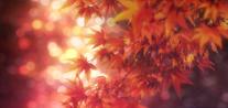 Vlcsnap-2013-09-28-14h46m22s5