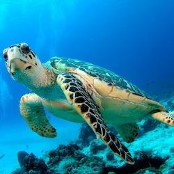 File:Quiz turtle.jpg