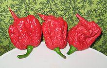 Carolina Reaper pepper pods