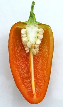 220px-Fresno pepper 4