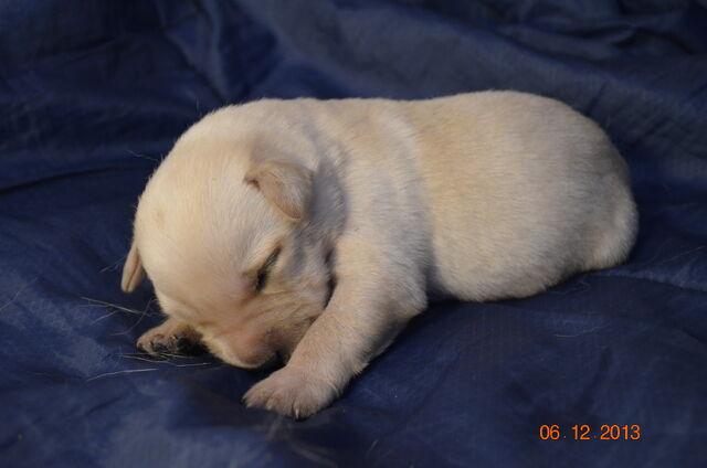File:Puppy1.JPG