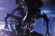 Reina aliens