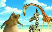 Madagascar-giraffe-cartoon-story