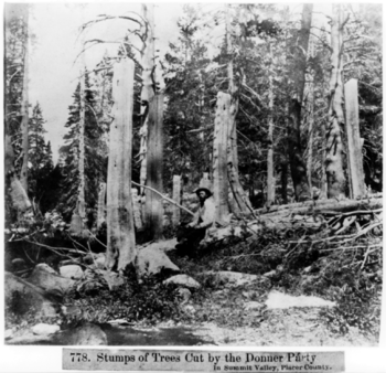 Stumps of trees cut by the Donner Party