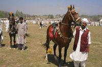 PakistanLahoreHorse&CattleShow