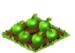 Candy Apples Seed