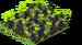 Blackberries Fruit