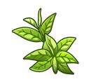 File:Tea Leaves.png