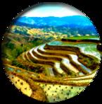 NepalRiceTerrace