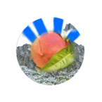 Mathalx Peachtree Icon