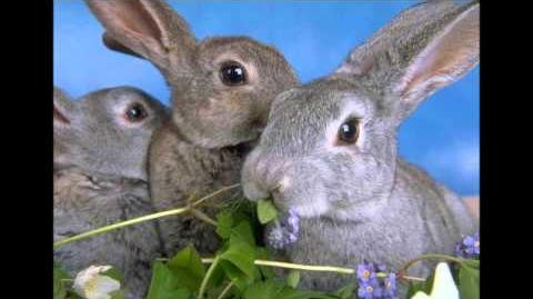 CREEPYPASTA bunnies