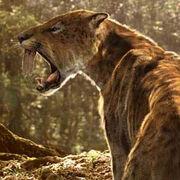 20081111 sabretooth tiger