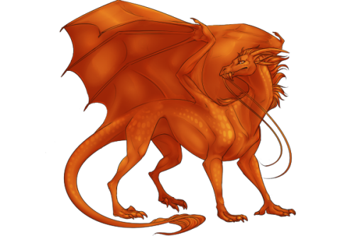 File:Dragon Adult.png