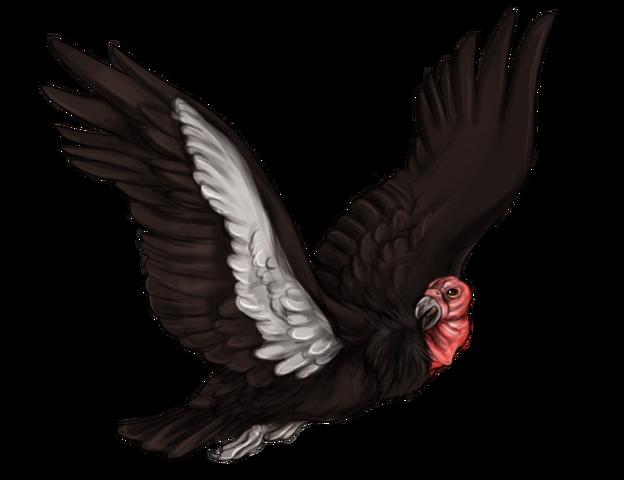 File:Item condor.png