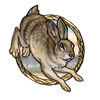 File:Cape hare.png