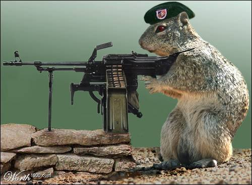 File:Funny squirrels with guns (2).jpg