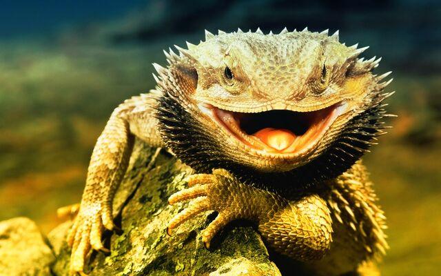 File:Lizard Dragon HD 13841.jpg