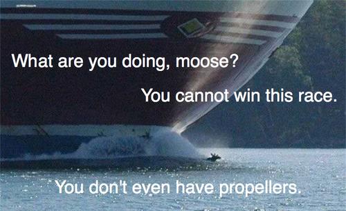 File:Mooserace.png