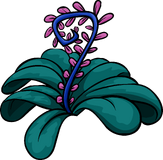 Jungle Bloom!