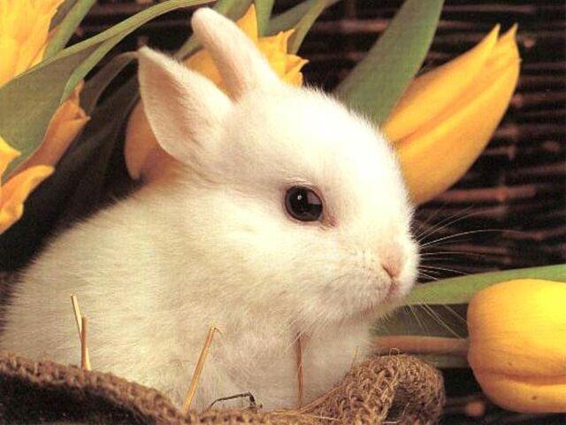 File:Bunny.JPG