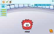 Red puffle state