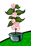 File:A Rare Flower Pot.png