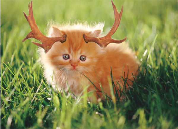 File:Moose Cat.jpg