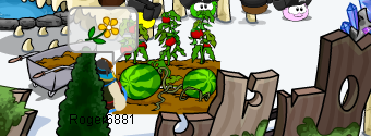 File:Garden flowers in a shipwreck.png