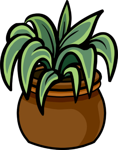 File:Evergreen Plant.PNG