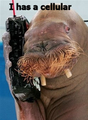 Icanhazwalruscellphone.PNG