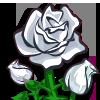 White Roses-icon